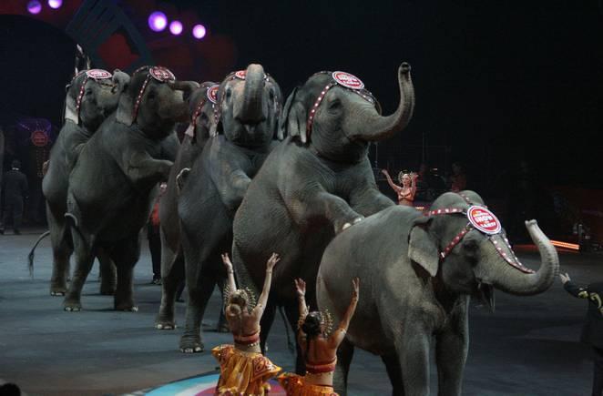 Bu ölkədə heyvanların sirkdə istifadə edilməsi qadağan edildi