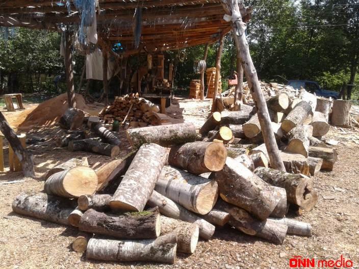 Qanunsuz yolla əldə edilmiş meşə materialı aşkar edilib