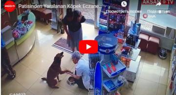 Ayağı yaralanan it yardım üçün aptekə gəldi – Video