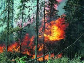 İsmayıllıda meşə yanır
