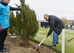 Prezident Şamaxıda ağac əkdi
