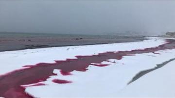 Xəzər suları QANA boyandı, insanlar qorxuya düşdü…