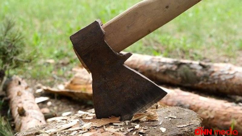 Lerikdə ağacların kəsilməsi ilə bağlı cinayət işi açıldı