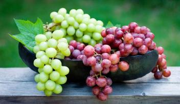 Azərbaycanda üzüm istehsalı artdı