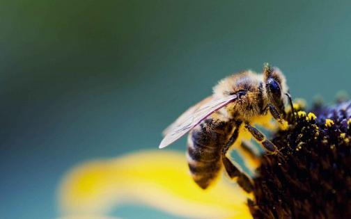 Arılar haqqında bilmədiyiniz MARAQLI 20 MƏLUMAT