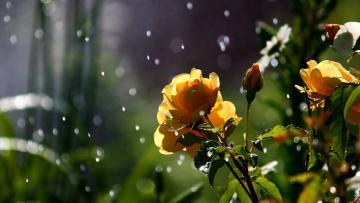 Şimşək çağacaq, yağış, dolu yağacaq – SABAHIN HAVASI