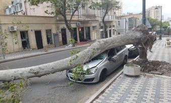 Güclü külək ağacı maşının üzərinə aşırdı